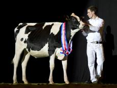 Extra foto's HHH-show online